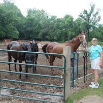 Saying hi to the horses at the barn