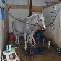 Maddie scrubbing a horse...