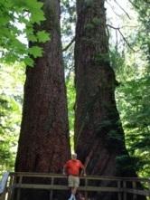 John by twin Douglas Fir Trees