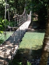 suspension bridge to old growth trees
