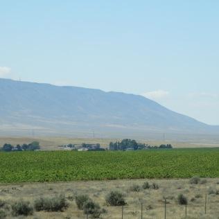 desert landscape with Rattlesnake Mountain in background