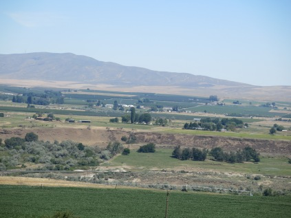 farms and fruit trees
