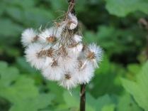 unidentified seed pod