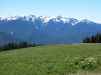 Olympic National Park, wildflower meadow at Hurricane Ridge