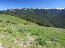 wildflower meadow at Hurricane Ridge, Olympic National Park