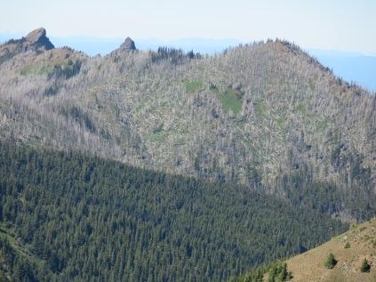 Olympic National Park, Hurricane Ridge, blowdown of fir trees