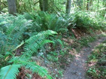 Nature Trail behind the Elwha Campground