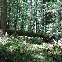 thick moss and large ferns blanket the forest floor