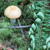 we saw several kinds of mushrooms