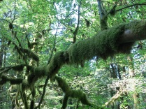 moss covered branches overhead