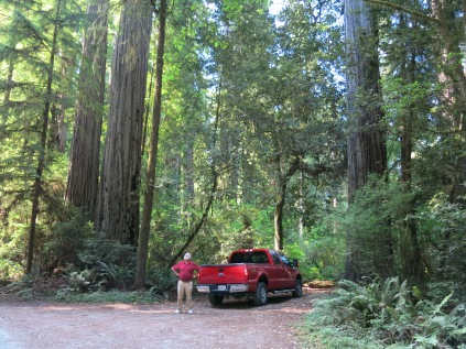 AJ looking up at the redwoods in the Jedediah Smith Redwoods SP