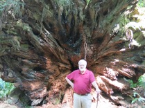 AJ by the roots of a fallen Coast Redwood