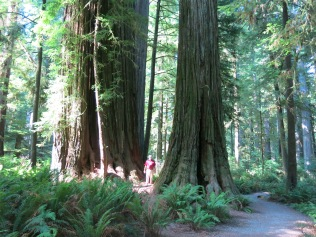 AJ standing between two large Coast Redwood trees