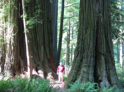 close up of AJ by the Coast Redwoods
