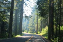 Coast Redwoods forest, Newton B Drury Scenic Parkway