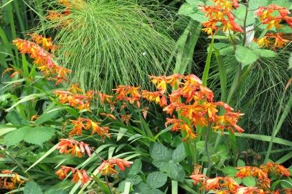 unidentified flowers