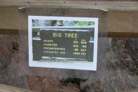 Big Tree stats