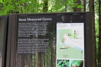 info about Stout Memorial Grove