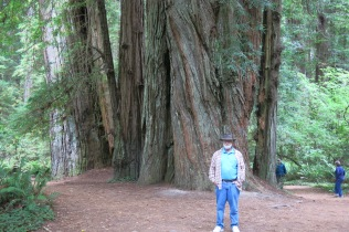 John by a colossal redwood