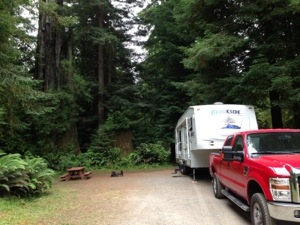 our campsite right under big redwoods