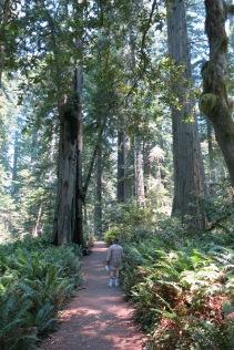 path through Lady Bird Johnson Grove