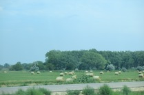 hay fields... bales come in a lot of different shapes these days