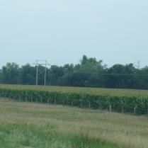 so many cornfields in Nebraska