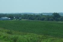 corn fields...
