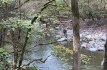 Fly fisherman - Little Pigeon River, off Greenbrier Road