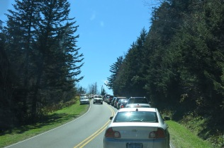 10-21-13 backed up traffic waiting to park at Clingmans Dome