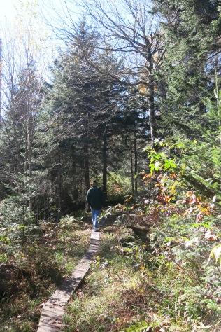 narrow boardwalk in Spruce-Fir Nature Trail