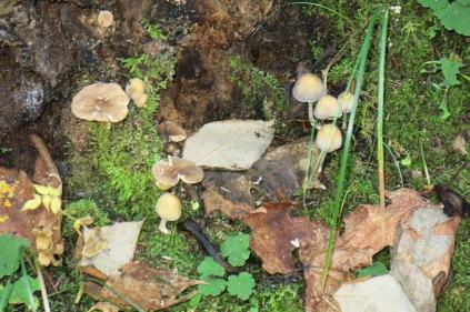 10-22-13 Many kinds of mushroom and fungi