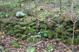 10-22-13 remains of farmer's rock wall