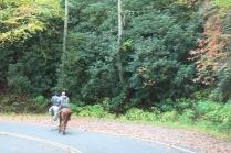 10-22-13 horses along Hwy 32