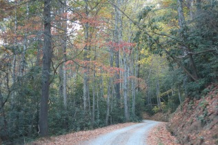 10-24-13 14 mile gravel road from Cataloochee to Big Creek