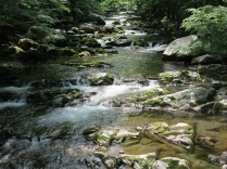 Baxter Creek at Big Creek Picnic area