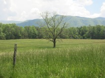 Tall grass in Cades Cove, Great Smoky Mountains NP