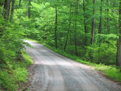 gravel road in Greenbrier section, Great Smokies