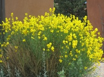 unidentified, garden in Cerrillos, NM