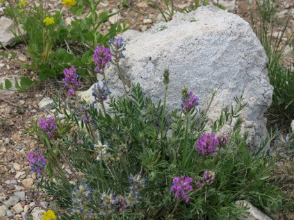 unidentified, along Sandia Crest Scenic Byway