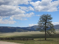 view looking across the valley, Valles Caldera National Preserve