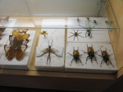 thousands of mounted insects