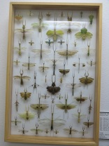 Praying Mantises of the World