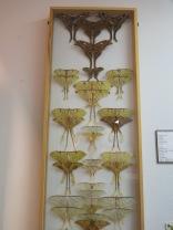 Luna Moths...