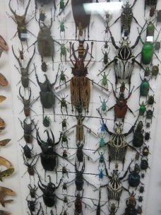 the collection of beetles was amazing
