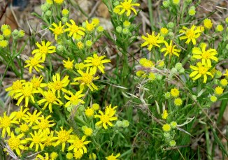 unidentified, roadside - Eagles Nest, NM - Scenic Byway NM 64