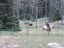 cowboy, riding through spruce/fir and aspen woods at 10,112 elev.