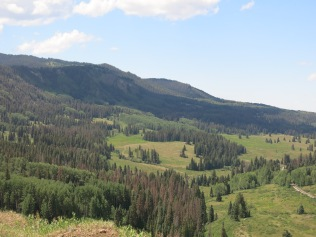We have seen mule deer and elk, running from the train... Spruce trees were killed by Pine Bark Beetles
