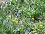 lots of wildflowers in the meadows, cliffsides and in the forests....
