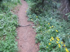 we saw flowers all along the trail....